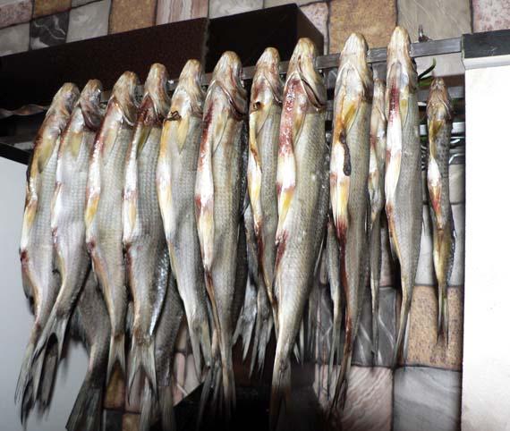 Fishing8